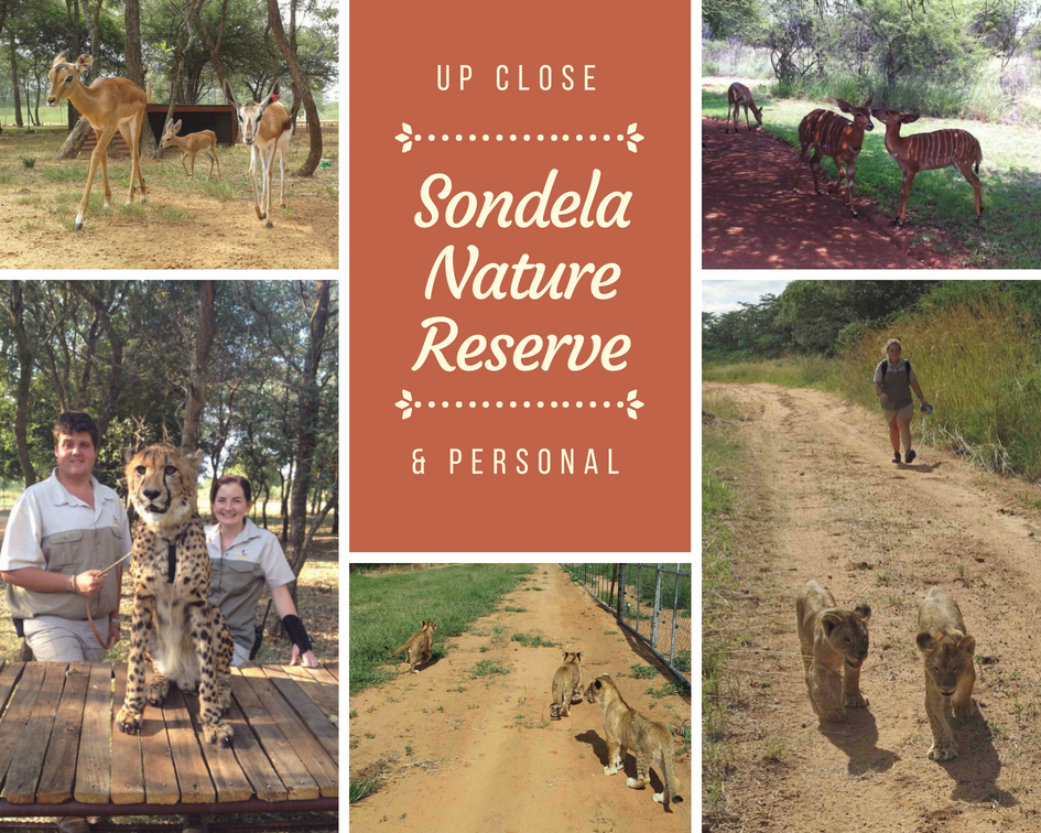 Holiday Experience - Up close with the wild