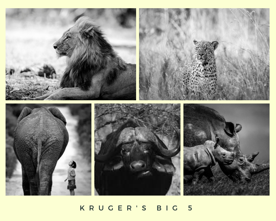 Big 5 Kruger National Park