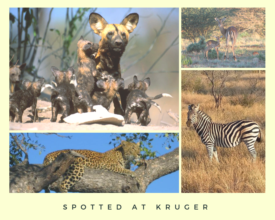 Kruger adventure with Anel